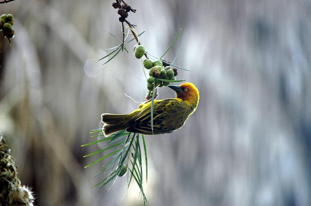 Finch, Bird, Feeding Time, Nature