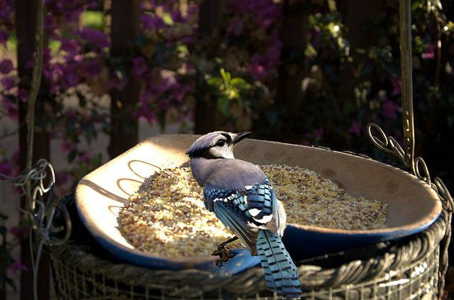 Bird, Feeding Time, Garden, Nature