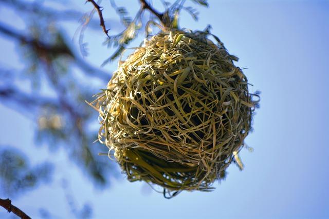 Nest, Bird, Nature
