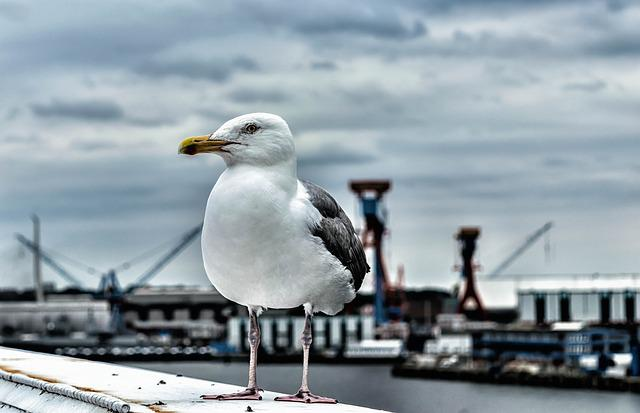 Seagull, Bird, Nature, Port, Baltic Sea, Seevogel, Sea