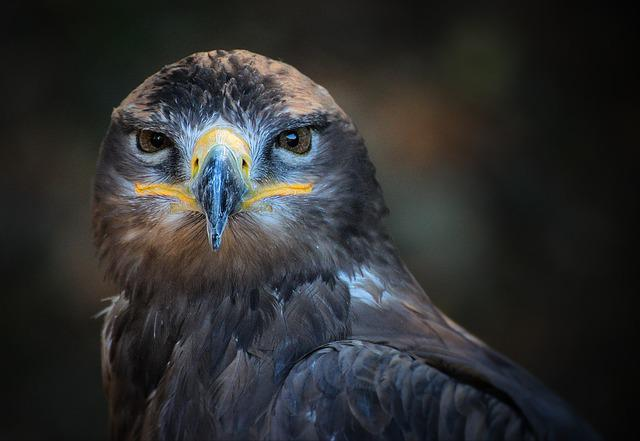Portrait, Bird, Nature, Wild, Predator, Closeup, Beak