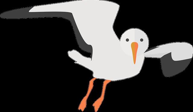 Seagull, Animal, Water Bird, Nature, Sea, Bird