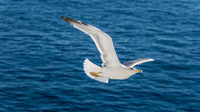 Waters, Nature, Bird, Sea, Seagull