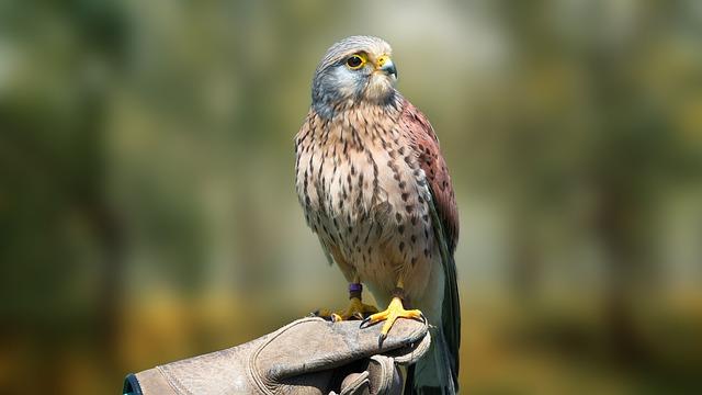 Bird, Nature, Animal World, Animal, Wing, Kestrel
