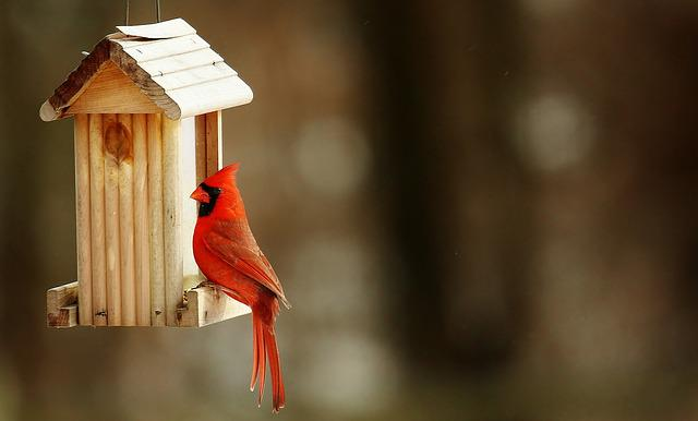 Cardinal, Birdhouse, Nature