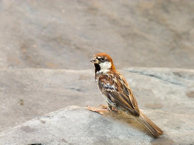 Birds, Nature, Animals, Pen