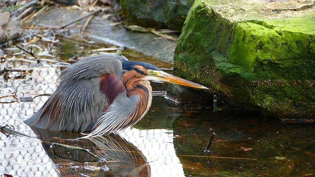 Nature, Body Of Water, Birds, Wildlife, River