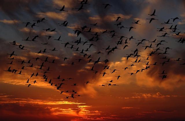 Flamingos, Swarm, Birds, Nature