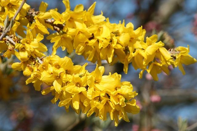 Spring, Bloom, Garden, Bush, Branch, Sunshine, Nature