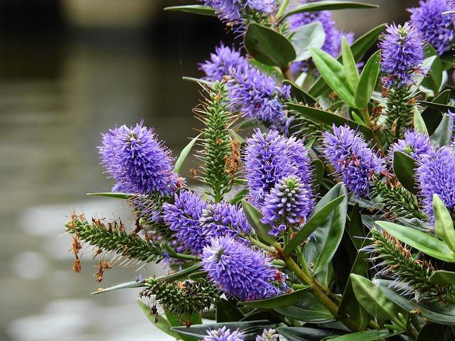 Flower, Blossom, Bloom, Purple, Nature, Plant