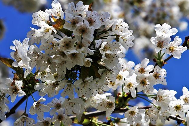 Spring, Sad, Fruit Trees, Blooms, Flower, Nature, Plant