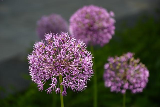 Nature, Plant, Blossom, Bloom