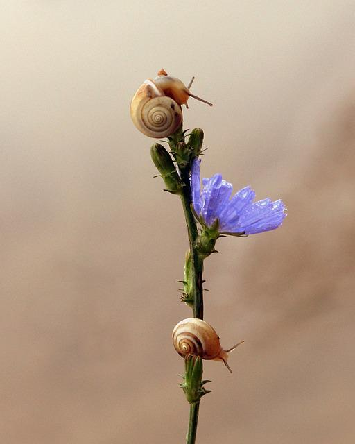 Snails, Flower, Blue, Climbing, Nature