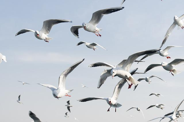 Blue, Sky, Blue-sky, Nature, Outdoors, Seagull, Day