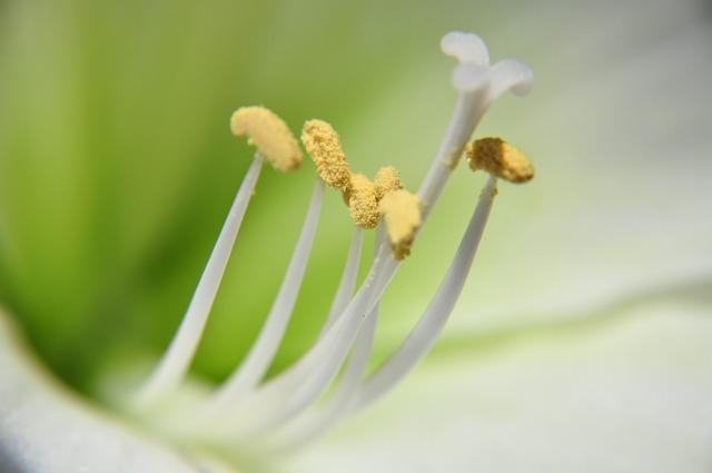 Nature, Flower, Blur, Plant
