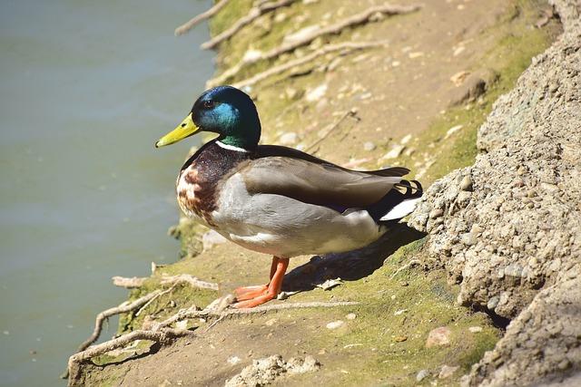 Birds, Nature, Body Of Water, Wild Life