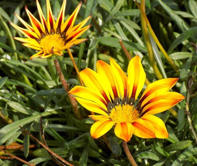 Nature, Plant, Summer, Flower, Garden, Botanical Garden
