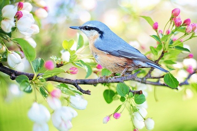 Spring Bird, Bird, Spring, Blue, Nature, Branch