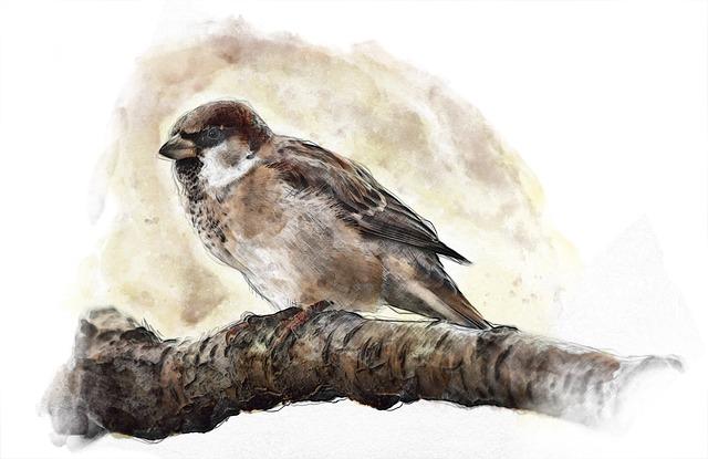 Sparrow, Bird, Nature, Branch, Watercolor, Water Color