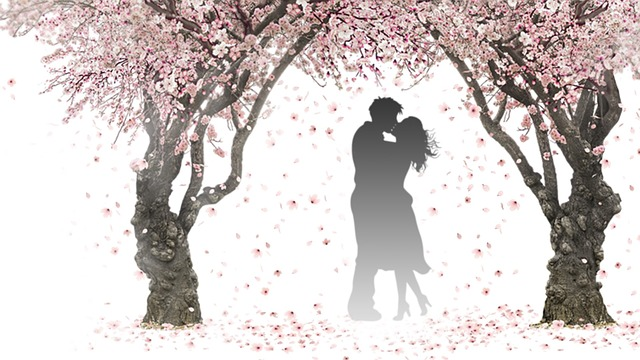Nature, Spring, Pink, Flower, Tree, Branch, Petals