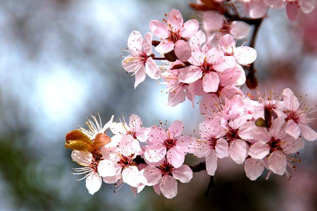 Branch, Nature, Season, Plant, Spring, Pink Flower