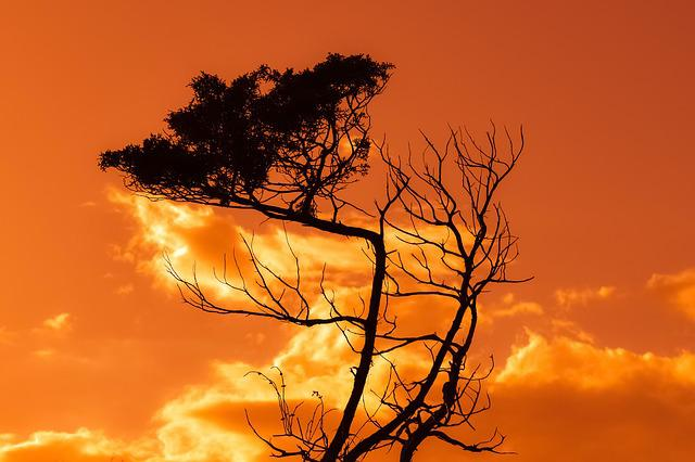 Tree, Branch, Sunset, Sky, Clouds, Nature