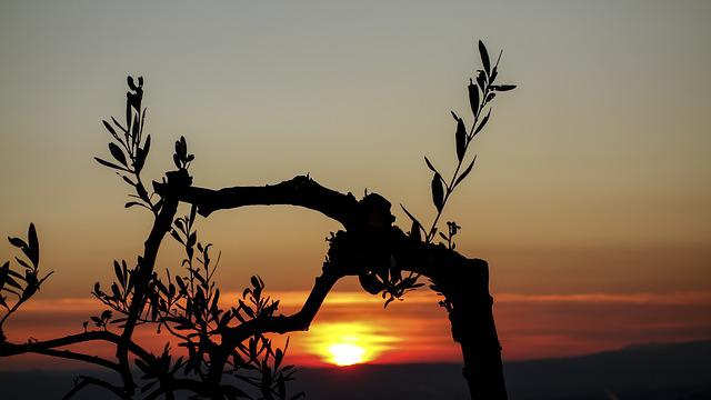 Sunset, Olive Tree, Branches, Nature, Olive Branch