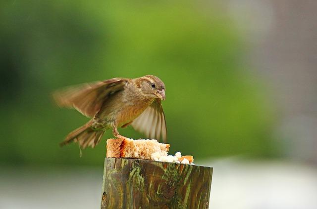 Sparrow, Bird, Movement, Animal, Beak, Bread, Nature