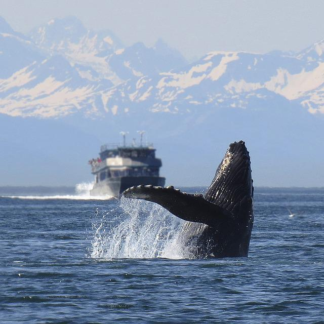 Humpback, Whale, Breeching, Alaska, Nature, Wildlife