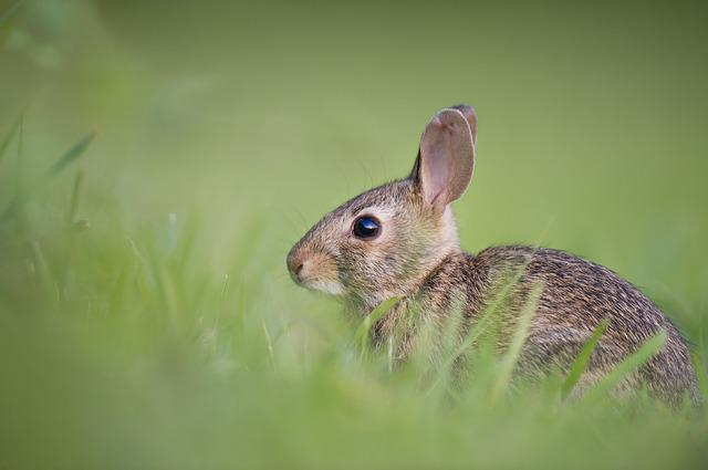 Adorable, Animal, Bunny, Cute, Grass, Nature, Rabbit