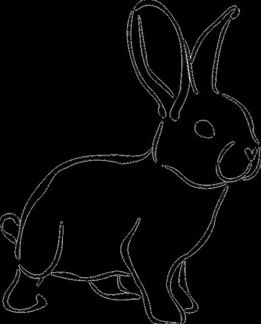 Rabbit, Animal, Wildlife, Nature, Bunny, Spring, Hare