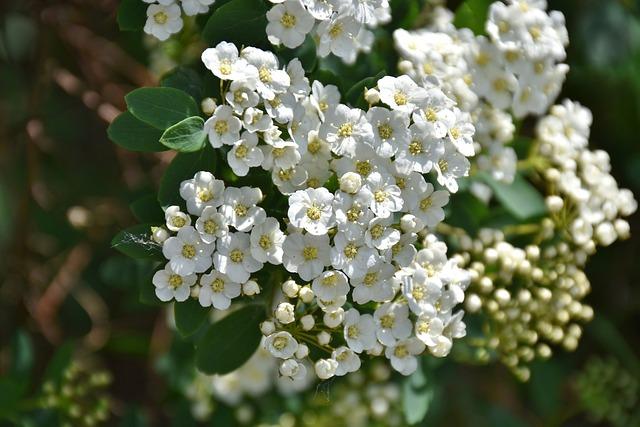Flower, Nature, Plant, Leaf, Tree, Garden, Bush, Floral