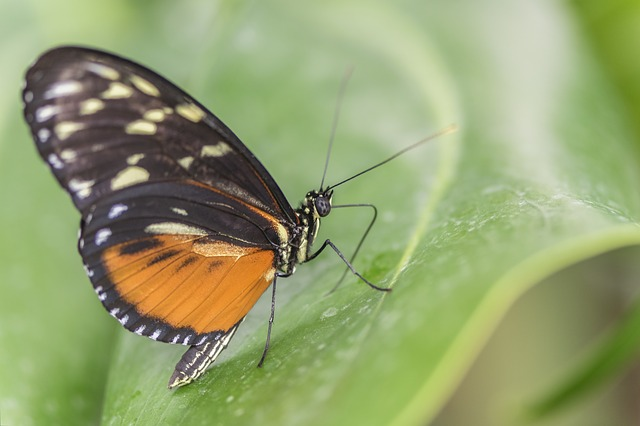 Insect, Butterfly, Nature, Animal World