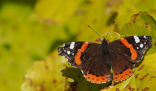 Butterfly, Macro, Provence, Nature