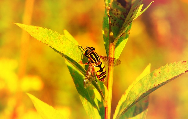 Gnilun, Insect, Muchówki, Bzygowate, Animals, Nature