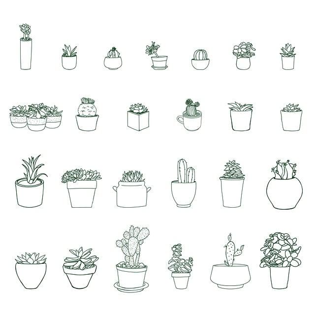 Plant, Nature, Pot, Potted, Succulent, Cactus, Cacti