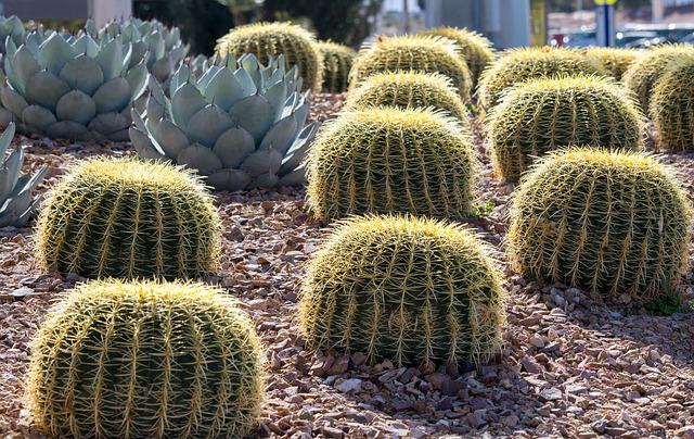 Cactus, Nature, Succulent, Desert, Sharp