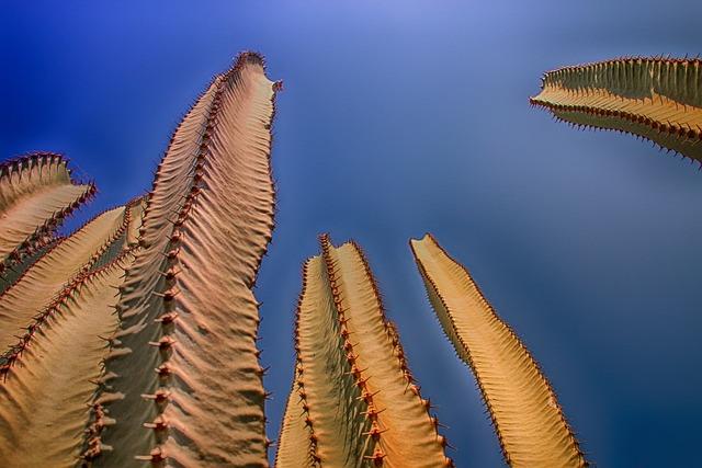 Cactus, Plant, Nature, Column Cactus, Prickly