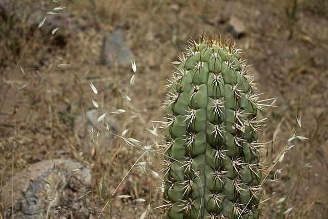 Cactus, Nature, Thorny