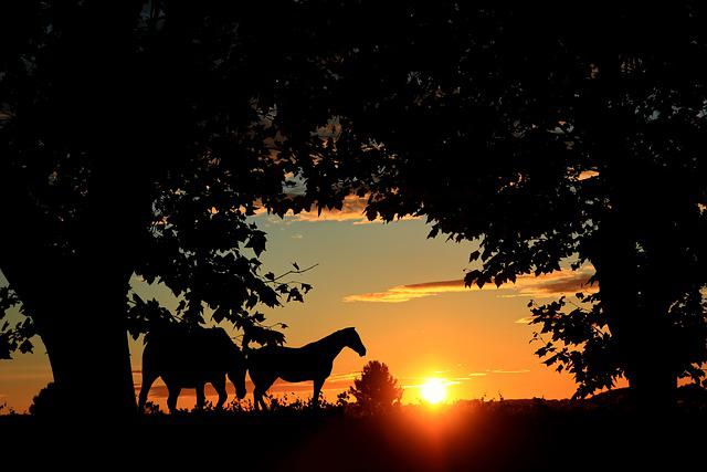 Sunset, Trees, Horses, Nature, Sky, Sun, Light, Calm
