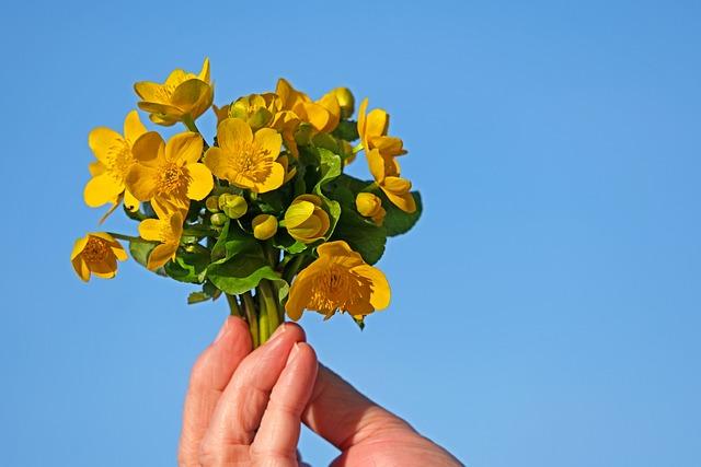 Caltha Palustris, Wild Flower, Yellow, Nature, Spring