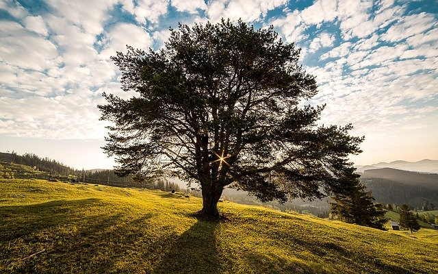 Tree, Dawn, Nature, Bucovina, Romania, Campulung