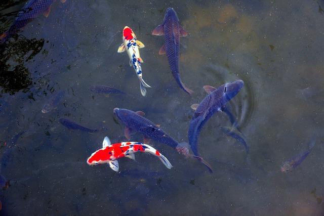 Fish, Nature, Pond, Carp