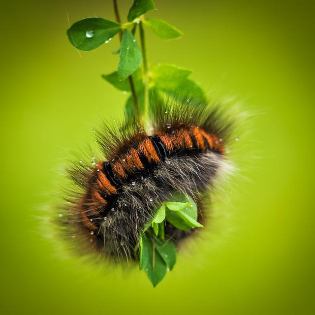 Caterpillar, Larva, Animal, Fauna, Nature, Hairy, Inch