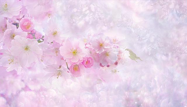 Cherry Blossom, Cherry Tree, Nature, Flower, Plant
