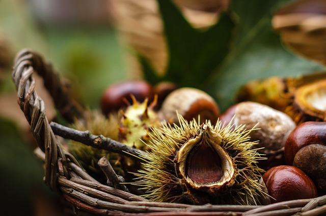 Castanea, Chestnut, Fruit, Autumn, Nature, Shiny, Brown