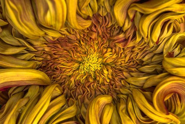 Flowers, Nature, Plants, Chrysanthemum, Autumn, Affix