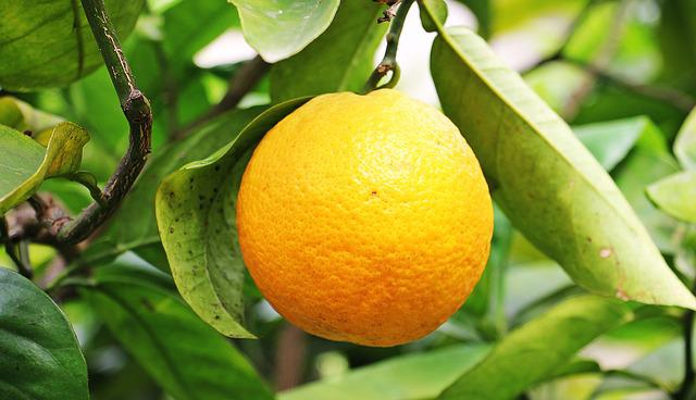 Orange, Citrus Fruit, Fruit, Orange Tree, Tree, Nature