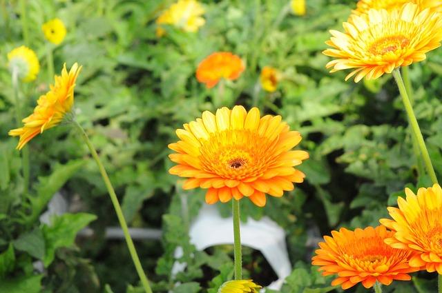 Flower, Essential Oils, Climate Change, Nature, Fresh