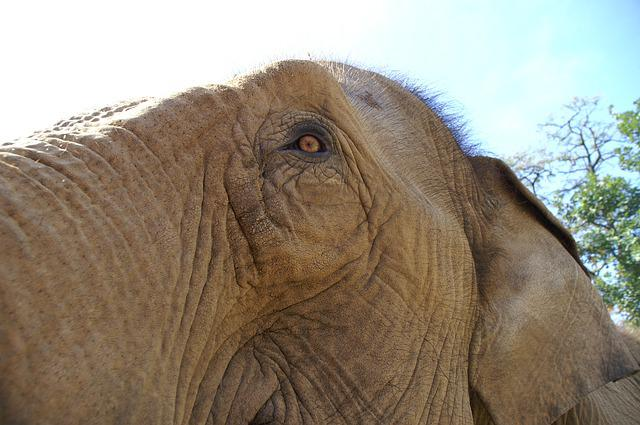 Animal World, Animal, Mammal, Nature, Elephant, Close